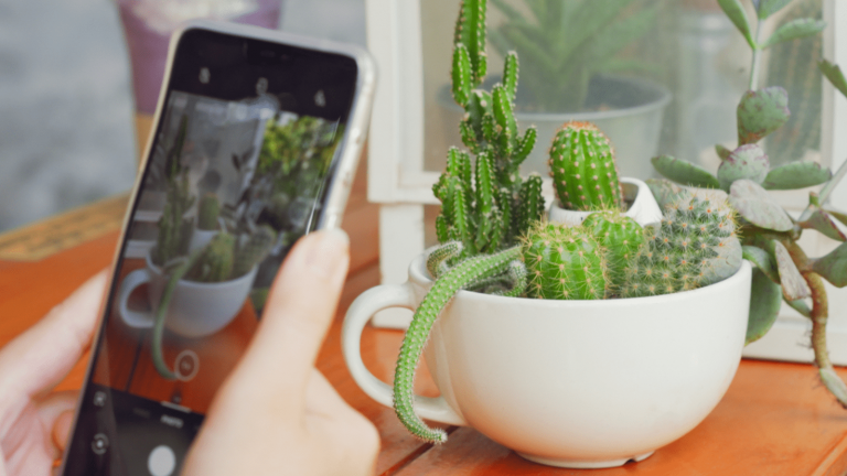 A Step-by-Step Guide to Take Insta-Worthy Shots of Your Indoor Plants