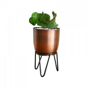 Planter & Foliage Product 17