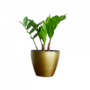 Planter & Foliage Product 22