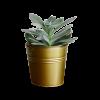 Planter25