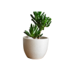 Planter28