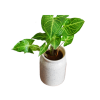 Planter31