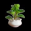 Planter32