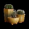 Planter33