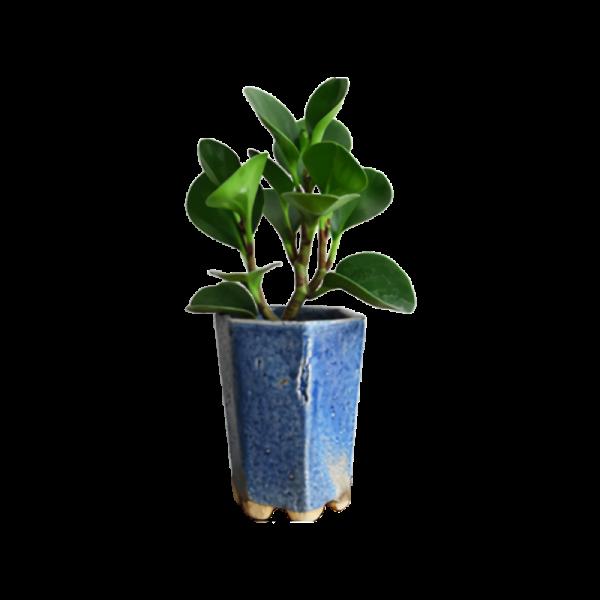 Planter39