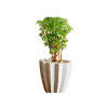 Planter42