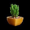 Planter5