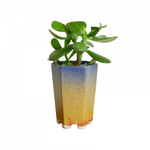 Planter & Foliage Product 9
