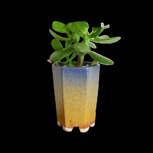Planter9